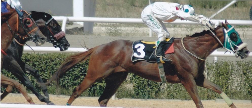 At Yarışları Analizleri ve Yorumları
